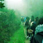 verde_caminhada